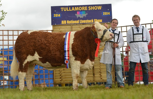 National Senior Heifer 'Fearna Destiny'