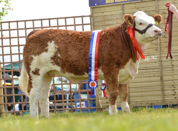 National Yearling Heifer 'Carbery Ellemay'