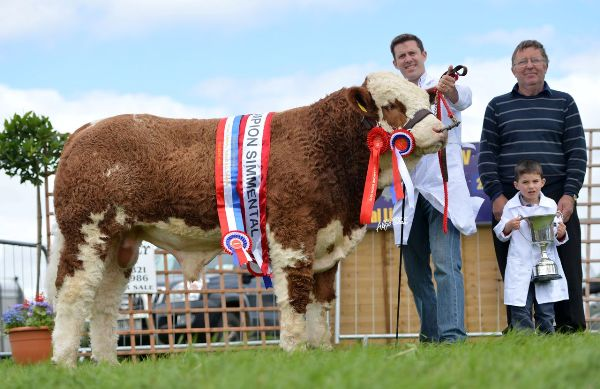Nat Yearling Bull Champ Male Champ_Res Overall Champ Dermotstown Dell Boy