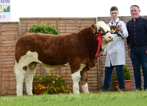 Tullamore Show 2017 National Simmental Reserve Male Champion 'Lissadel Jackpot VIP'