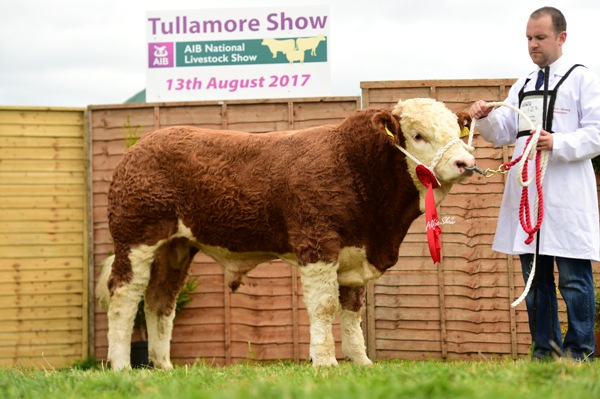 Tullamore Show 2017 Simmental Bull Calf Born on/between 1 Dec 16 & 31 Jan 2017 'Bearna Dhearg Honda 50'