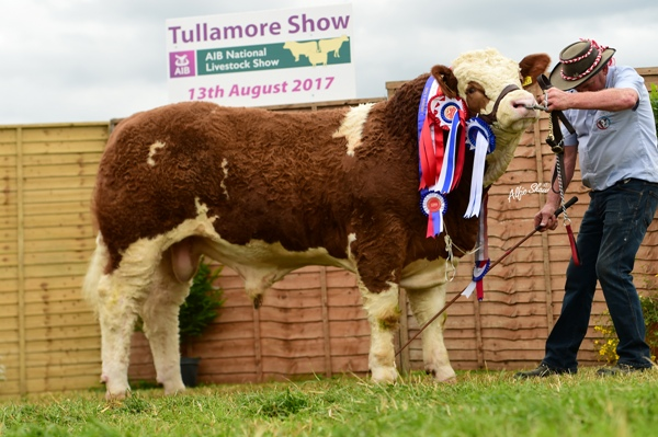 Tullamore Show 2017 Overall Reserve Simmental Champion 'Raceview Herman'