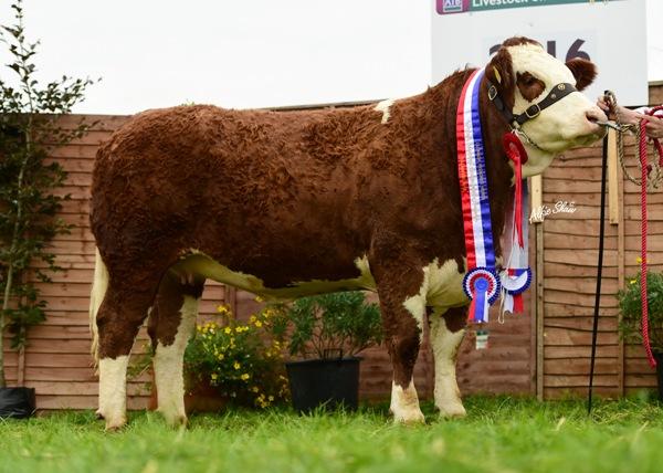 Nat Senior Heifer Champ Fearna Faith