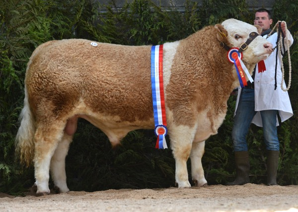 Champion 'Littlerock Cracker' €3500