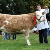 Tullow Show 2011 - 1st Prize 2010 Heifer Class 'Seepa Bearl'