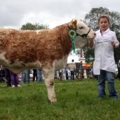 Tullow Show 2011 January Heifer Calf Champion 'Shiloh Herd Classy Lady'