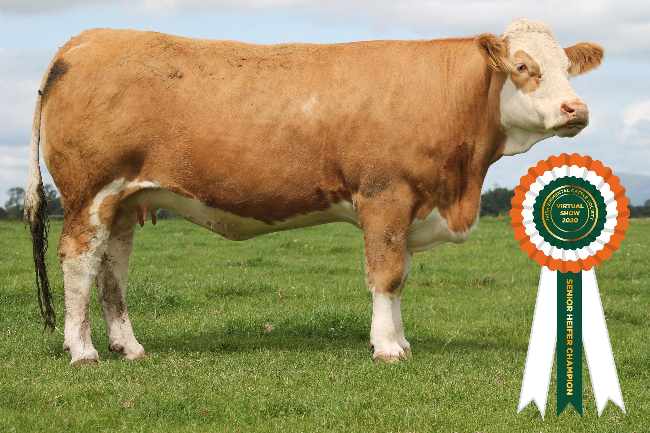 Results Class 5 – Senior Heifer