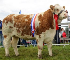 Champion Commercial Simmental Heifer for Sharon Killoran & family with Jennie Aherne & VK Agri Recycling