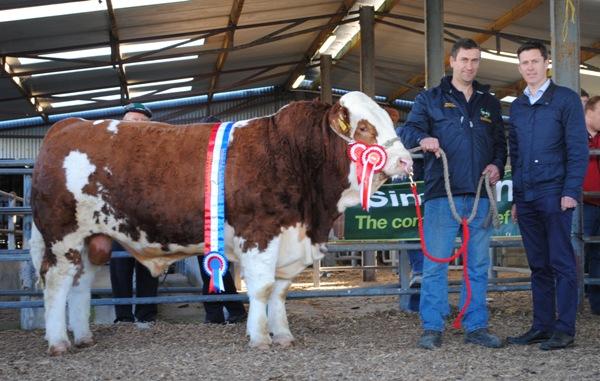 110518-Bull-Champion-Bingfield-Jagger-€3250