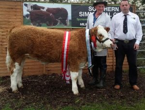 Barryroe-Overall-Breed_Inter-Calf_Sth-Club-Yearling-Heifer-Champ-Raceview-Gypsy-Verona.jpg
