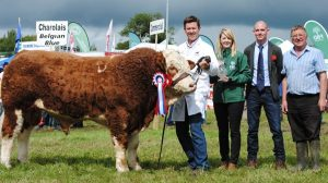Virginia-FBD-Sponsored-Overall-Calf-Champ-Dermotstown-High-King.jpg