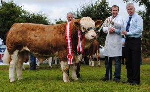 Virginia15-Yearling-Bull-Overall-Champ-Champ-Barnattin-Flash.jpg