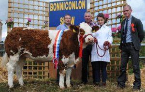 bonniconlon-mcpadden-national-simmental-x-heifer.jpg