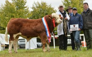 national-senior-bull-calf-champion-auroch-deuter-p.jpg