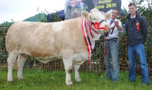 Athlone Show Overall Simmental Champion 'Clonagh Darling Eyes'