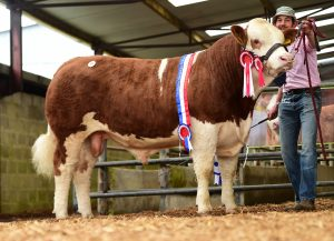 Clonagh Just a Dream - Junior Male Championsold €12,500