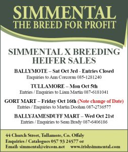Simmental X Breeding Heifer Sales