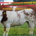 Ballymote Simmental X Heifer Sale 2018
