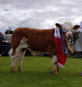 Bandon19 Male & Overall Champ Dripsey King Of Hearts