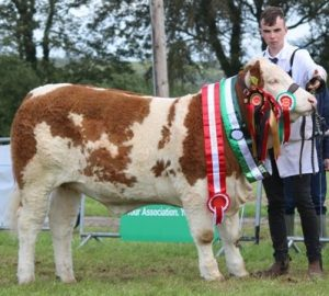 Overall Champion Yearling Champion & Club Champion 'Corbally Kerrys VIP'