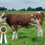 Results Class 17 – Junior Heifer Calf