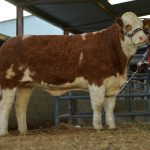 Roscommon Sale Results October 2019