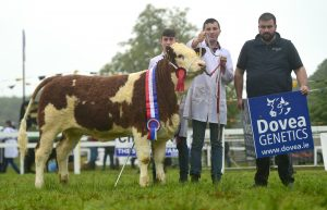 Dovea Strokestown18 Senior Heifer Calf Thornford Jemina Sean & Ryan Callan & John Lynch
