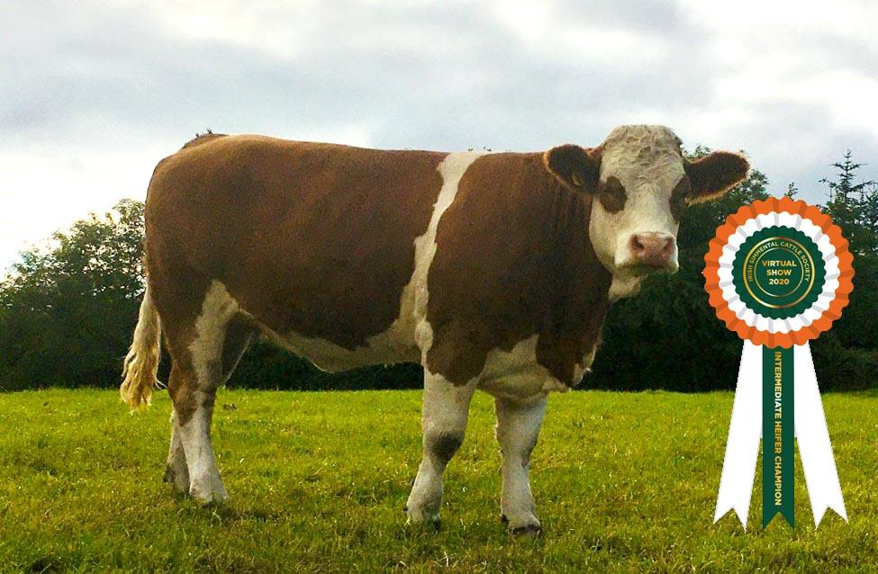 Results Class 6 – Intermediate Heifer