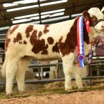 Top Priced Animal at Roscommon Premier Show & Sale 2018