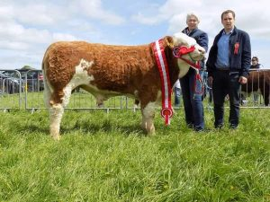 Midleton19 Champion Dripsey King of Hearts