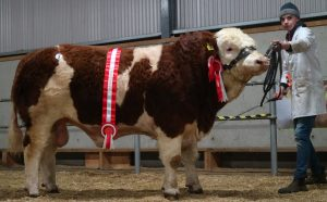 Mount Jay - Male Champion sold for €3000