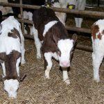 Monaghan Dairy Farm Feature