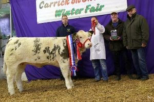 Overall Simmental Champion and National Simmental X Weaning Heifer Champion at the Winter Fair Carrick on Shannon exhibited by Shane Giltinane