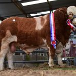 Roscommon Premier Show & Sale, March 16th 2019, Results