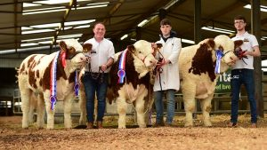 Roscommon Sale Report November 2018