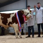 Tullamore Show & Sale Results