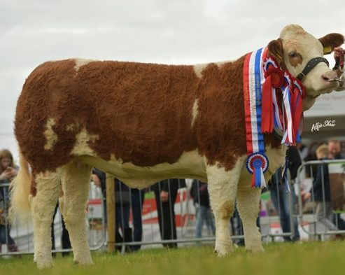 Home - Irish Simmental Cattle Society