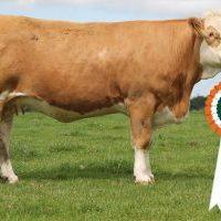 1 Senior Heifer Champion 38 (1)