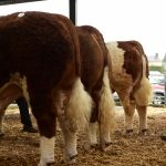Tullamore Show & Sale, April 12th, 2019