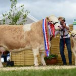 Clonagh Darling Eyes ET – National Simmental Champion 2018
